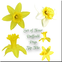 Daffodil Zip Pack by WDWParksGal-Stock