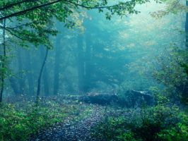 enchanted wood by losgeloest