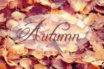 Autumn Leaves by hayzy