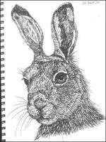 Hare by structuresque