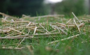 Grass by JCaceres