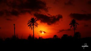 Sunset with palm by DEN4PHO