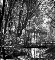 Shadowy Woods by mfr751