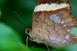 Butterfly Photo 26 by blookz