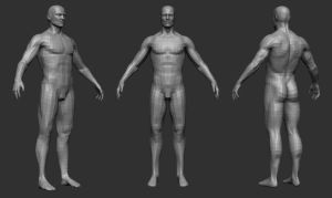 male anatomy study wire by opengraphics