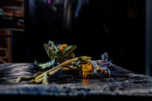 Still Life by aglezerman