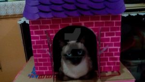 DIY Cat House by Mariannedee