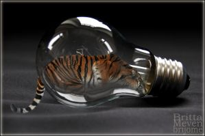 Tiger in the light bulb by brijome