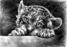 Little. big cat by A-anarchia