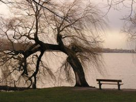 weeping willow by sugarcomakat