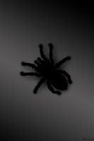 Spider black by Kavel-WB