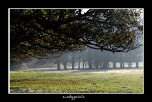 Trees in the mist. by sandyprints