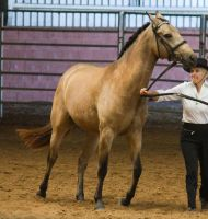 STOCK - 2014 Andalusian Nationals-4 by fillyrox