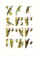 Antique birds print 9 by OMEGA86