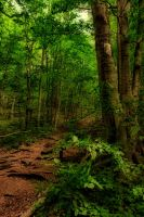 I love forest by tomsumartin