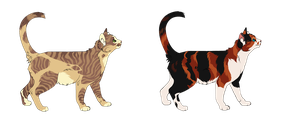 Feline Adoptables [Closed] [1] by WhiteAdoptables500