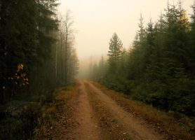 peaceful autumn path by KariLiimatainen