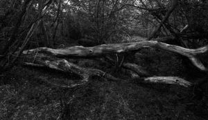 Fallen Tree, Wilkswood by Xs9nake