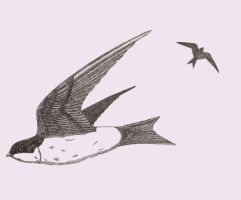 House Martin by Worker-for-the-Wind