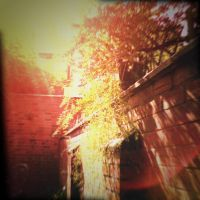 Holga Print 13 - Backyard by uselessdesires