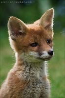 Fox Cub 09 by Alannah-Hawker
