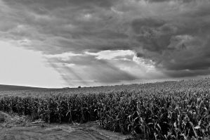 Storms in the Fields 2 by Salemburn