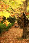 Street of Autumn. by incredi