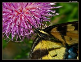 Tiger and Thistle by boron