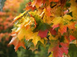 Colors of autumn by Bauliina