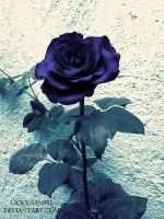 Blue Rose by Vicky-SanTH