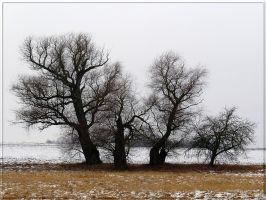 Some trees... by Yancis