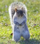 Got Nuts by ABJR47