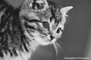 Clyde by KayleighBPhotography