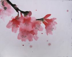 cherry blossom by Sesalina