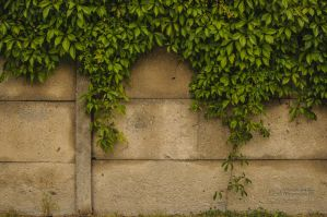 Foliage on the Wall by reznor666