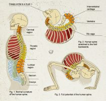 Human spine by yuni