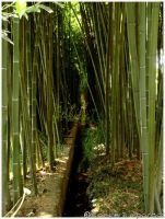 Bamboo style by Camille-D-Sparda