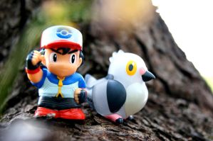 Ash and Pidove
