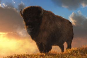 Buffalo At Dawn by deskridge