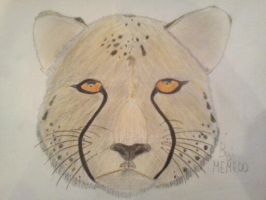 Cheetah drawing by Meme00