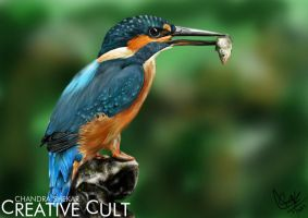 The KINGFISHER by CreativeCultChandU
