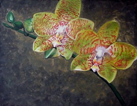 Phalaenopsis Orchid by Ethan-Carl