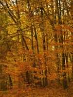 Mississippi Fall Color 4 by texasghost
