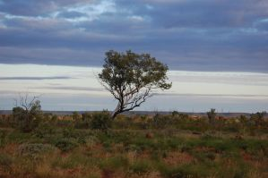 Lone Trees by Psittacidae13
