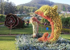 Ooty Rose Show by abidddd