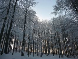 winterforest VII by mimose-stock