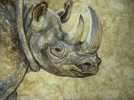 Golden Rhino by HouseofChabrier