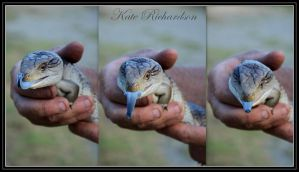 Blue tongue lizard by Purple-Dragonfly-Art