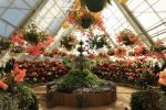 Begonia Greenhouse Stock by blaisedrew62