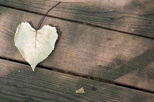 Heart Leaf on Deck by amarand